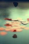 PicsArt_1371666663104.jpg
